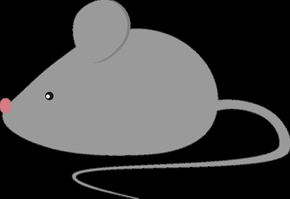 obrázek hlodavce